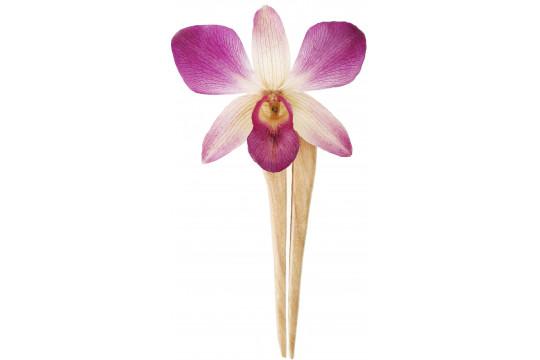 Orchidea Viola con Forcina